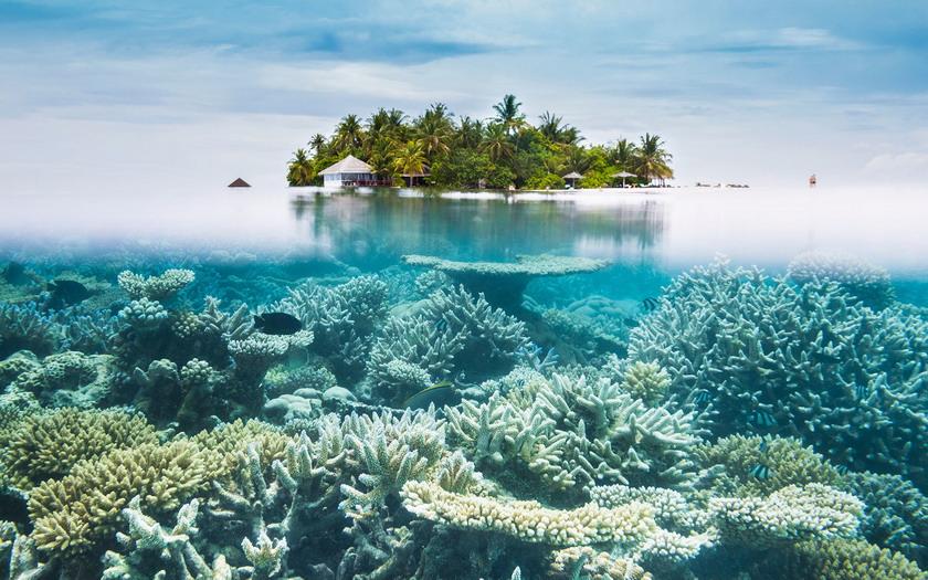 Coral reef, Maldives