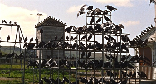 "Scene from Alfred Hitchcock's ""The Birds"""