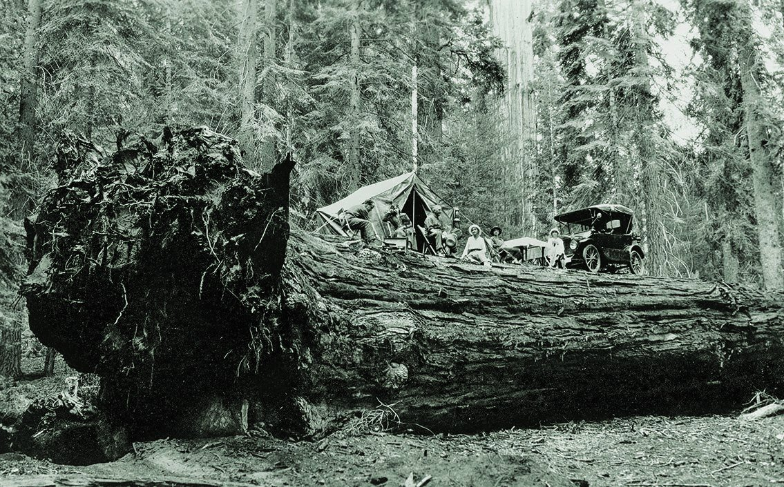 Vintage outing on top of a giant sequoia that blew down