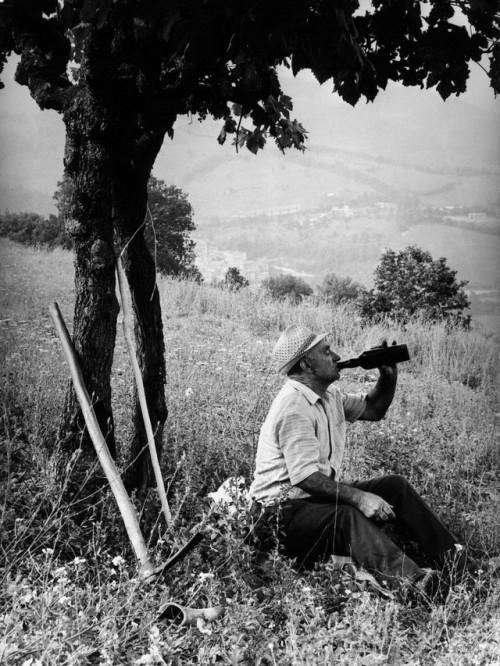 Farmer taking a winebreak