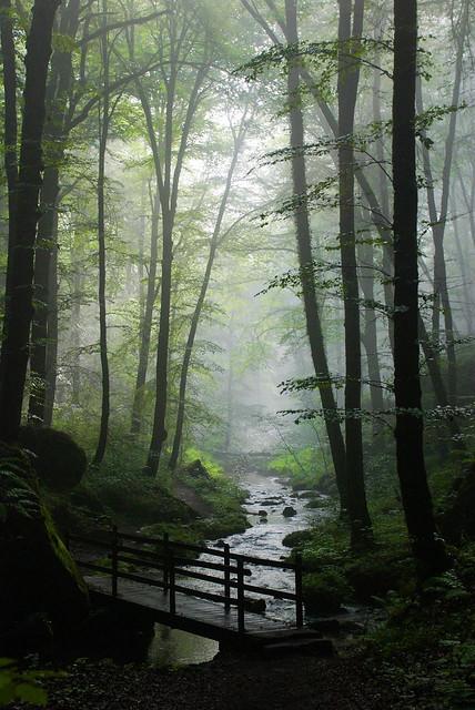 Stream in aforest