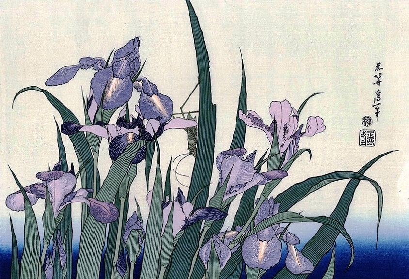 Iris Flowers and Grasshopper by Katsushika Hokusai