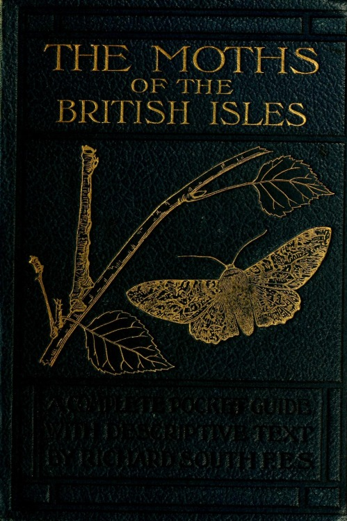 The Moths of the British Isles