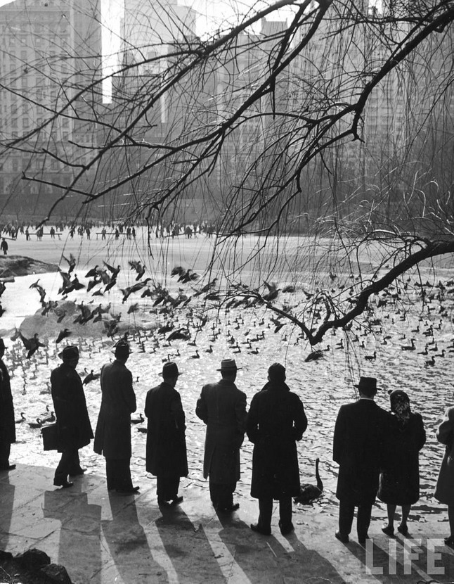Central Park, NYC by Andreas Feininger,1940s(?)