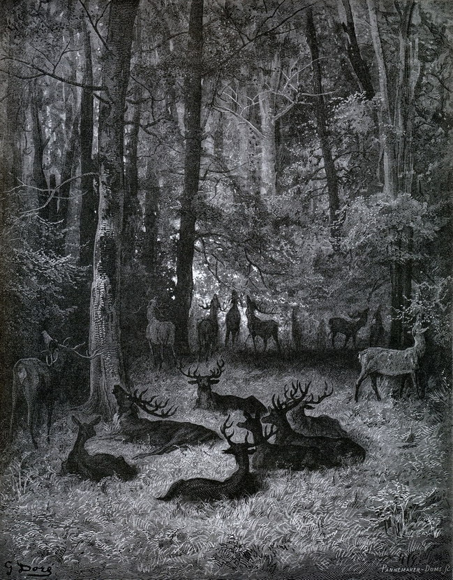 Herd of deer at night in the forest