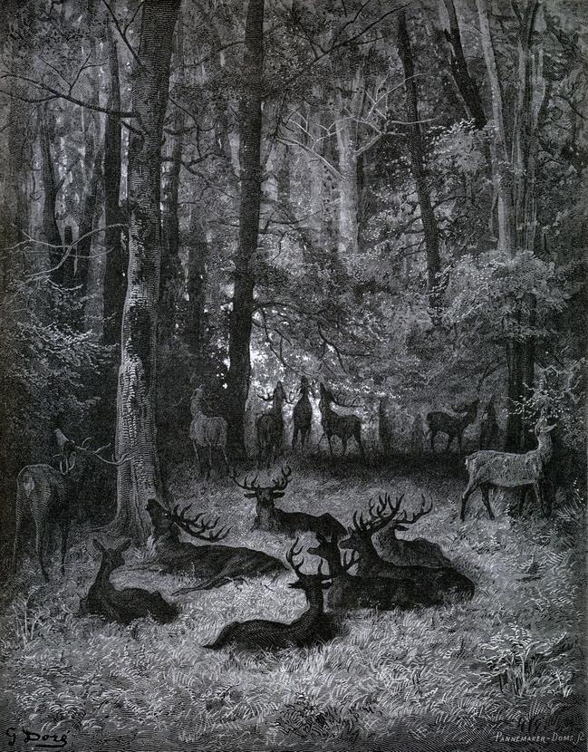 Herd of deer at night in theforest