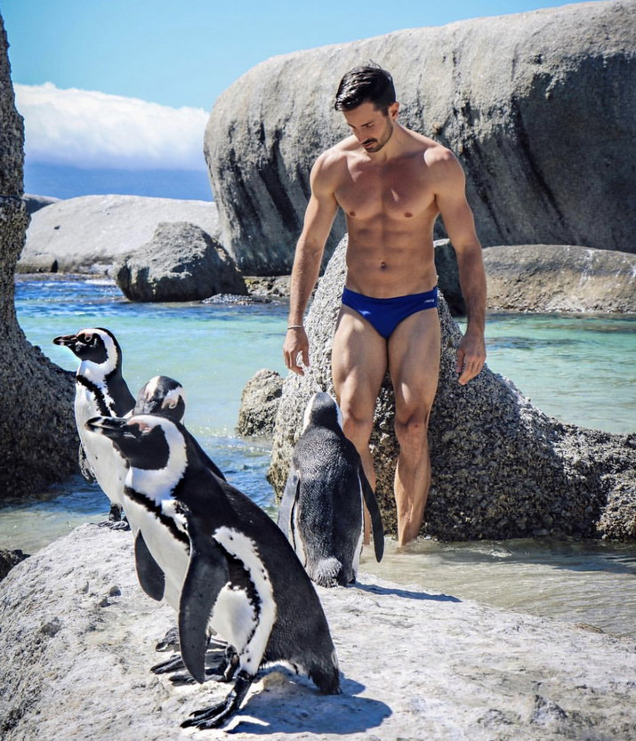 Model with penguins