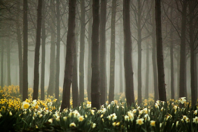 Spring flowers in a misty forest