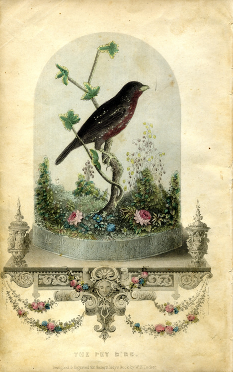 The Pet Bird