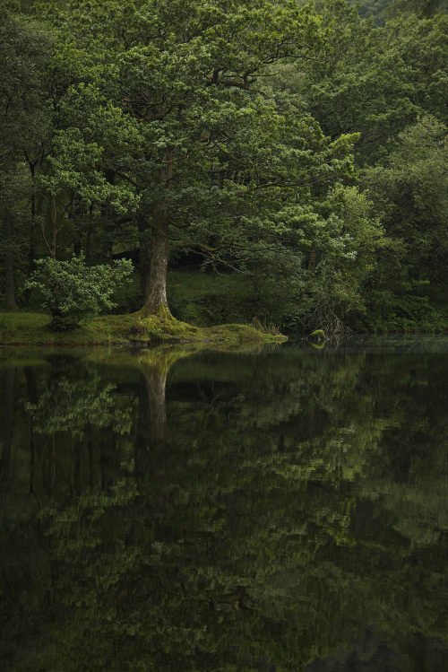 Greenery, photo by Stephen Turner