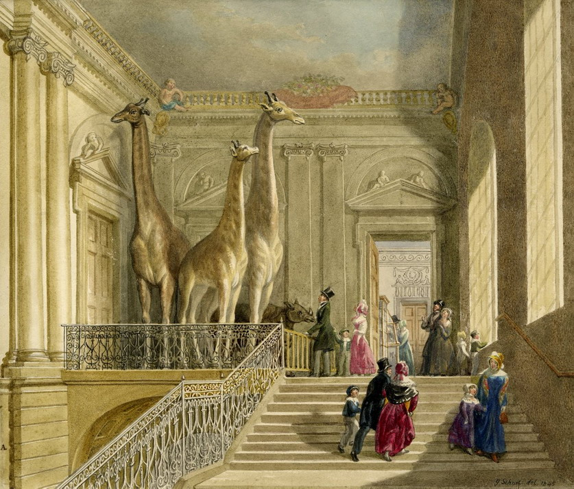 Stuffed giraffes on exhibit in the entrance of the old British Museum, London, 1800s