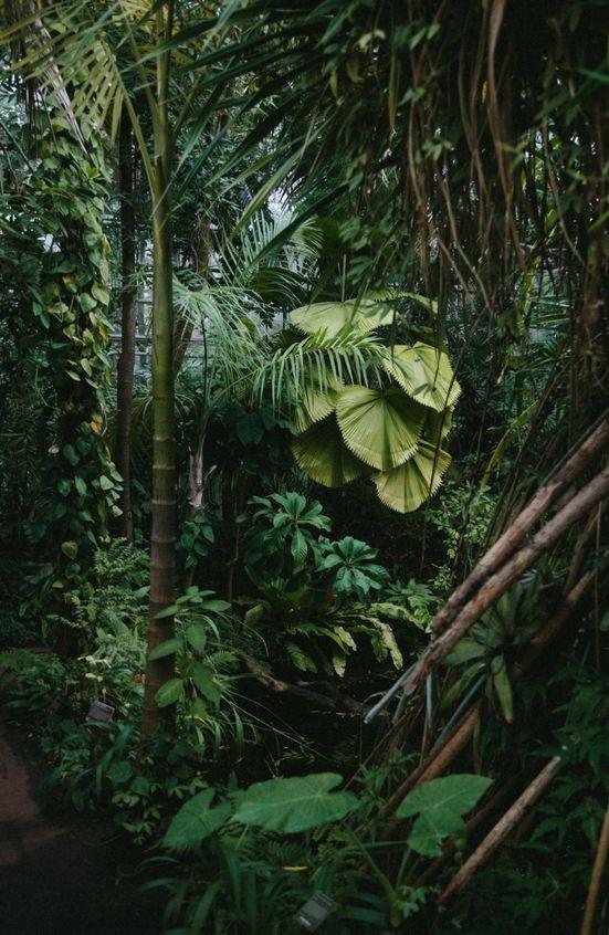 Hortus Botanicus, Amsterdam,Netherlands