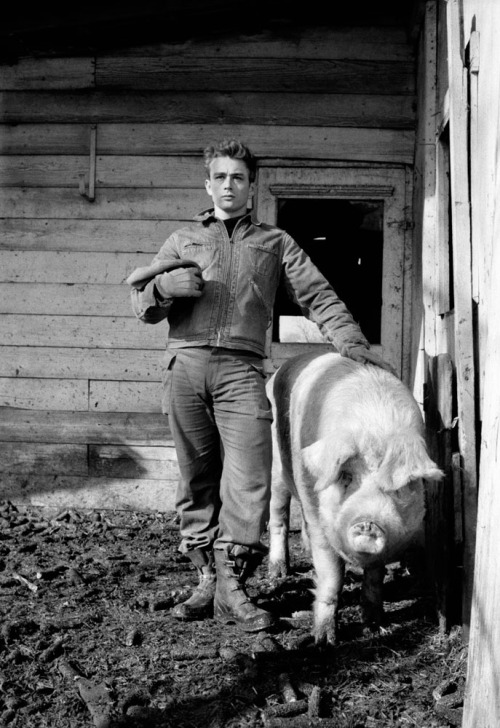 James Dean down on the farm