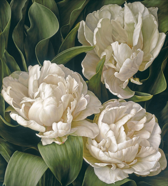 White double tulips