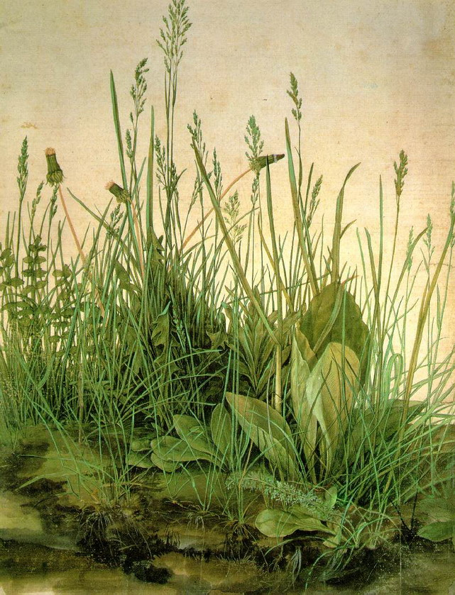 Weeds and grasses