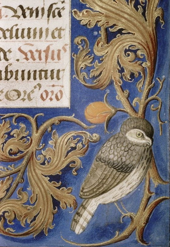 Bird sitting in the corner of an ancient manuscript
