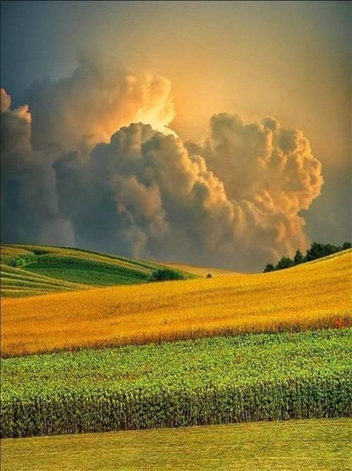 Clouds and fields of grain