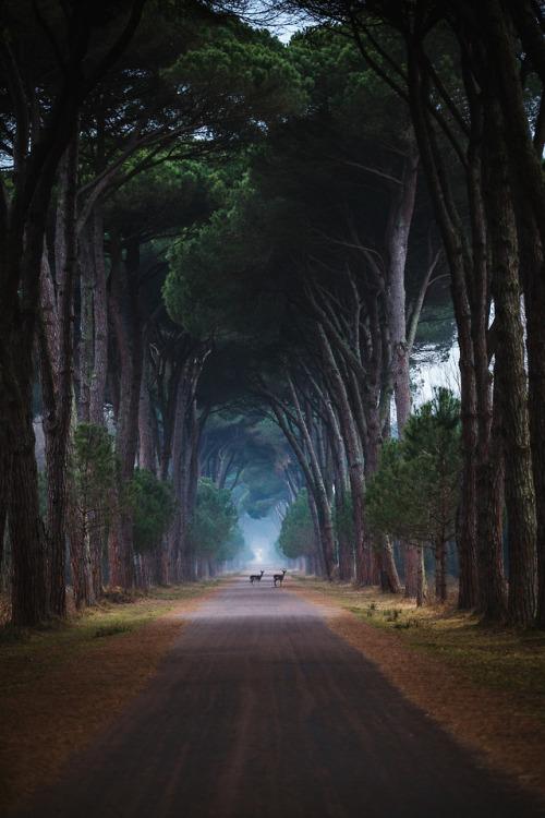 Deer, Italy