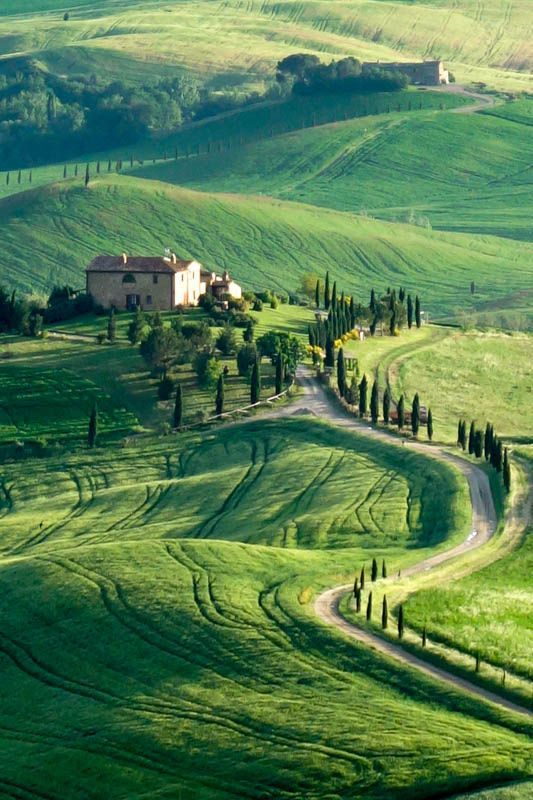 Wheat fields in Spring, Tuscany, Italy