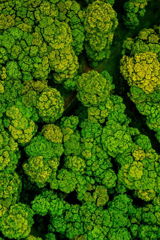 Forest in Brazil fromabove