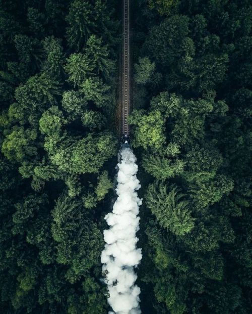 Train in a forest