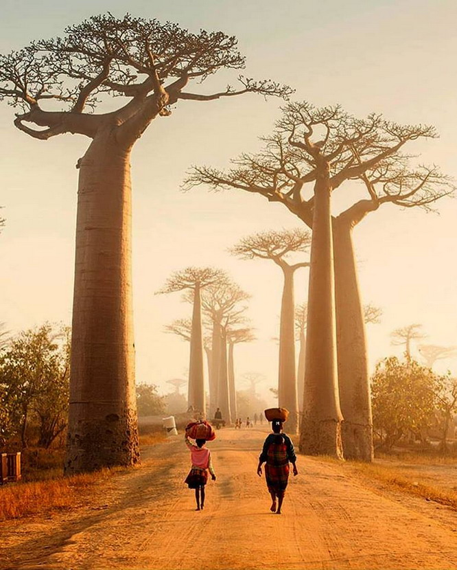 Bao Bao trees,Madagascar