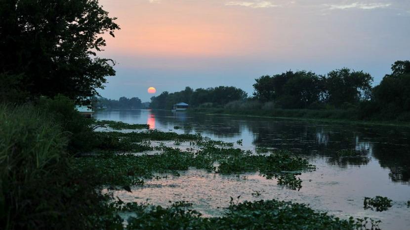 A bayou inLouisiana