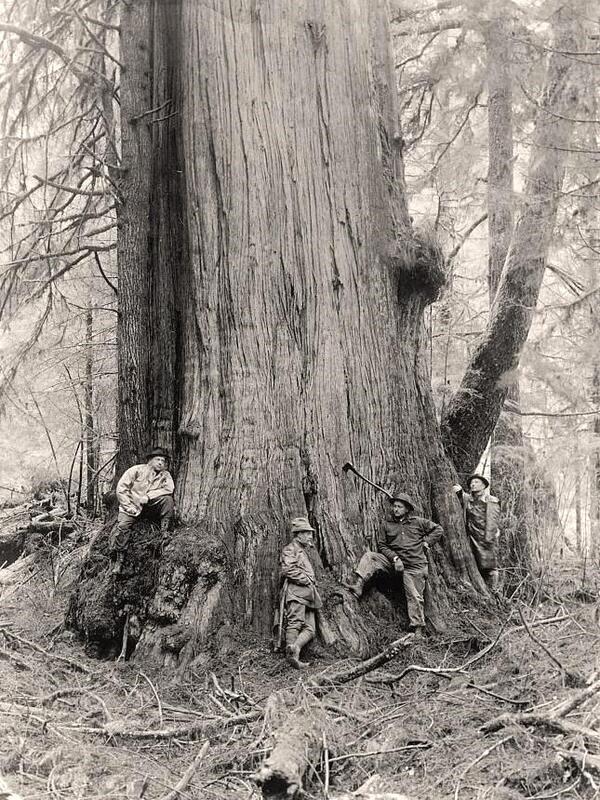 Lumberjacks, California, circa1900
