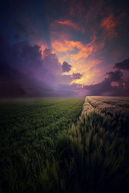 Wheat, photo by JohnNoe