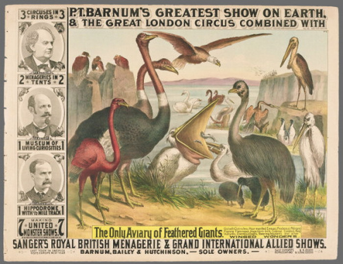 PT Barnum show of giant birds, London, 1800s