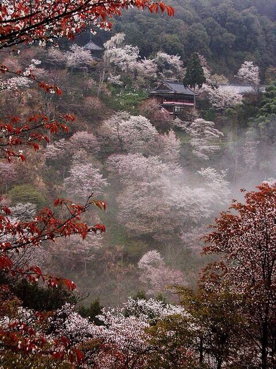Japanese maples and cherrytrees