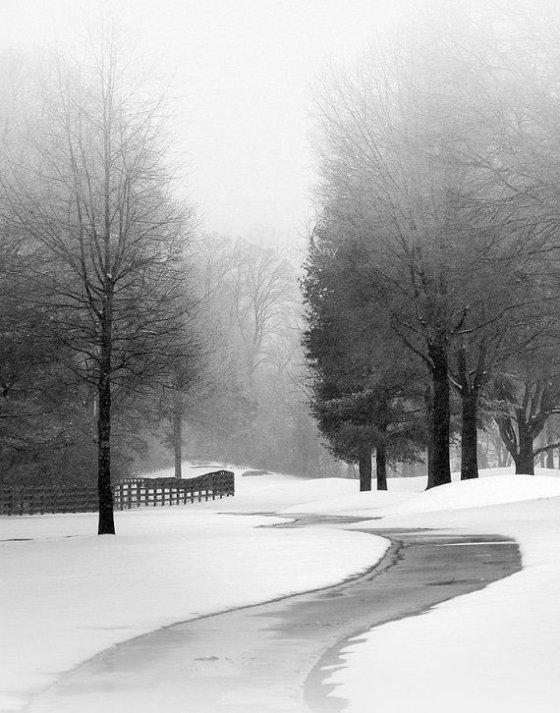 SNOW Nicholas Bell
