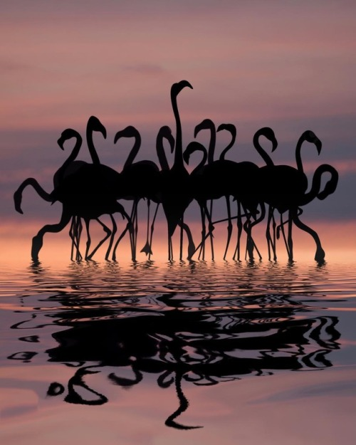 flamingo 40