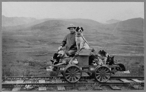 Man on a rail car with many dogs, Alaska, 1912