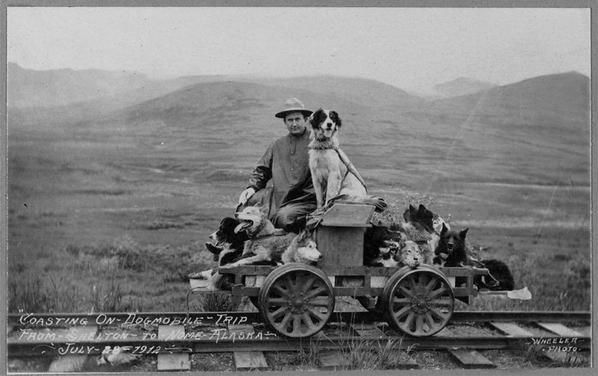 Man on a rail car with many dogs, Alaska,1912