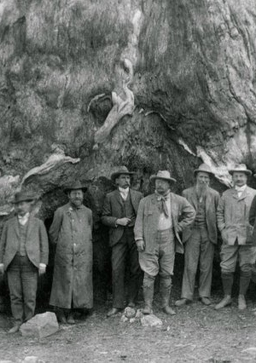 Teddy Roosevelt at the base of a giant tree with a group of men