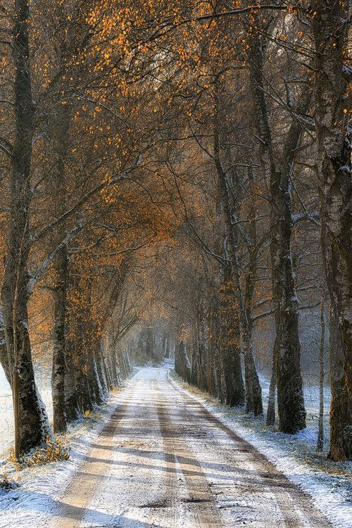 wintry road 3