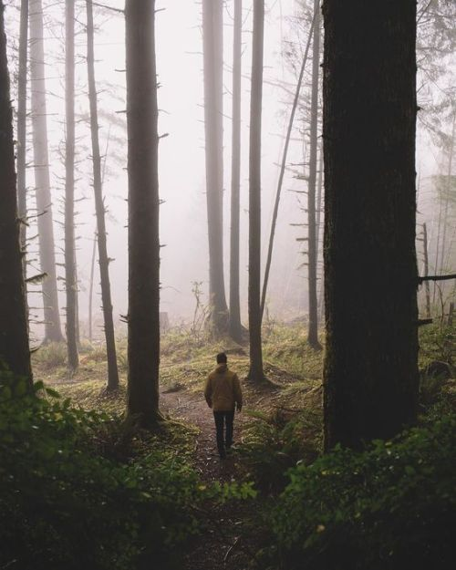 Lone hiker in theforest