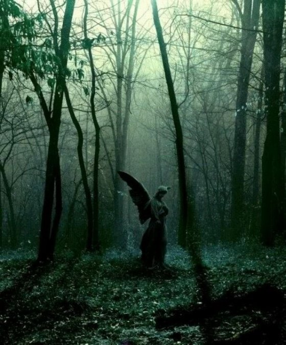 angel in the forest
