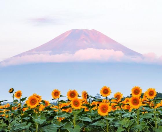 JAPAN FUJI 41280