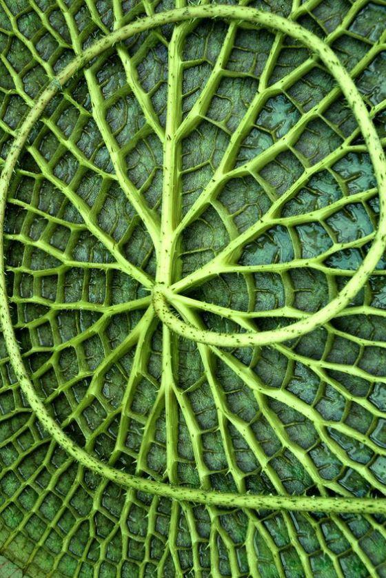 leaf 890