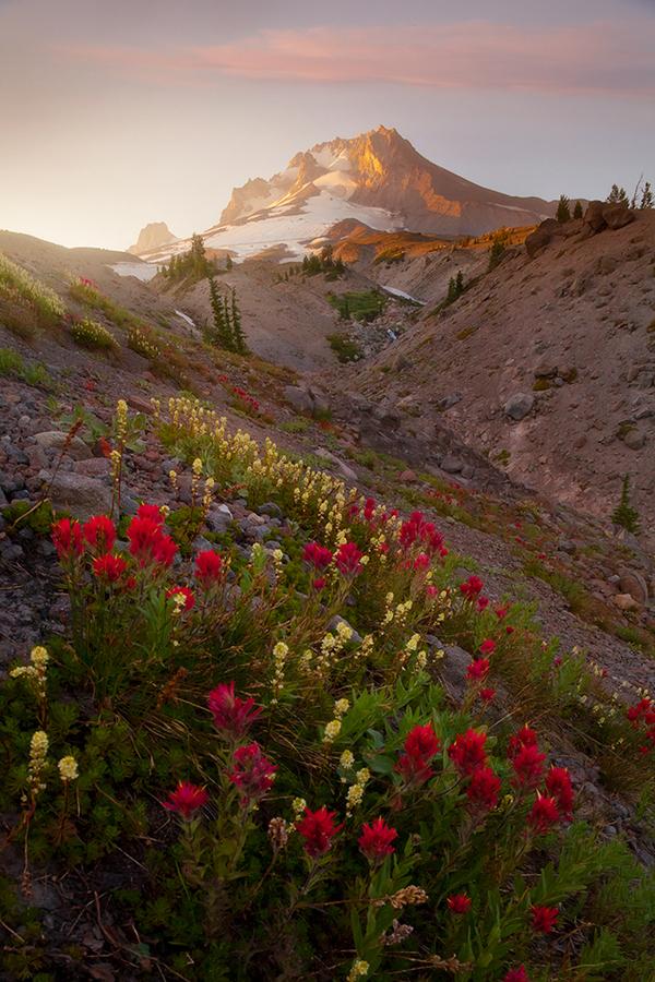 Wildflower in themountains