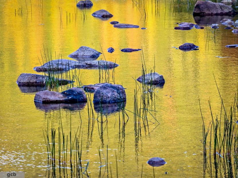 A golden pond