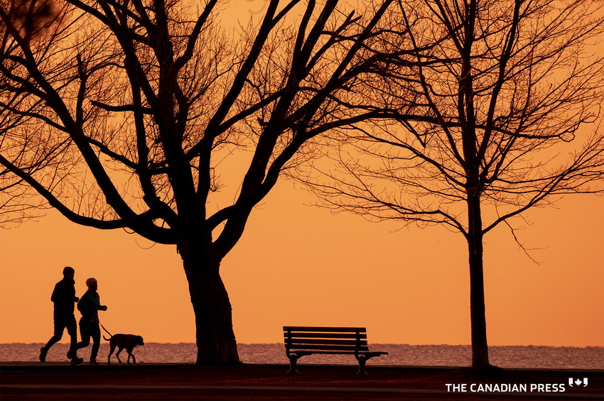 Silhouette in a park,Toronto