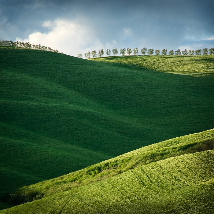 Wheat fields in spring, Tuscany,Italy