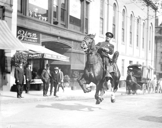 POLICE HORSE BOSTON 1905