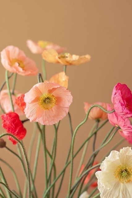 poppies 144