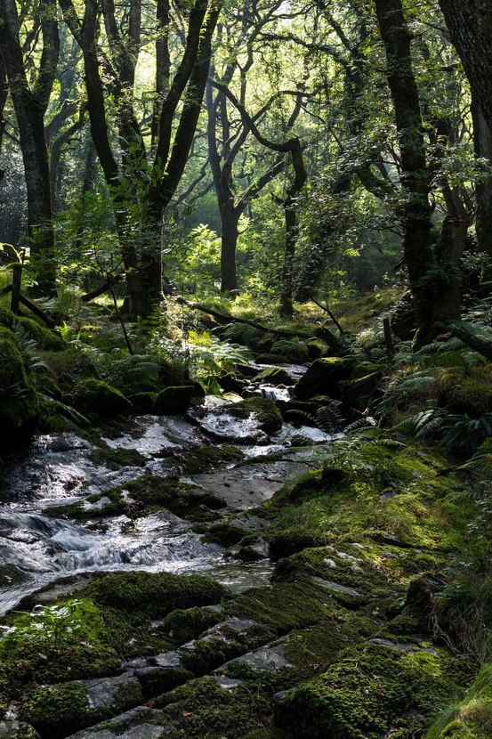 Mossy forest stream