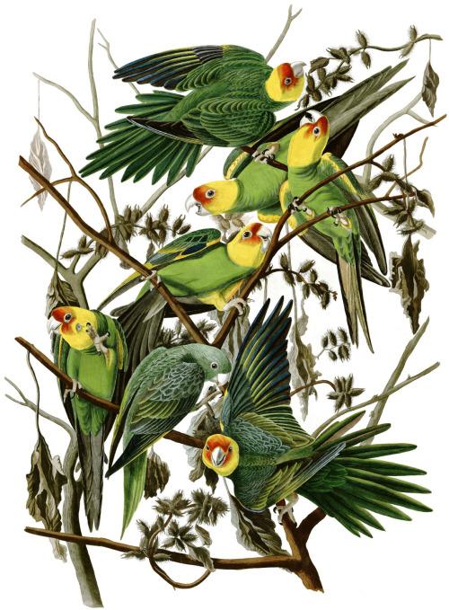 bird parrots 4