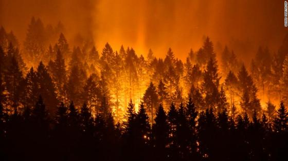 FOREST FIRE 298